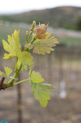 Source: https://hackaday.io/project/6444-vinduino-a-wine-growers-water-saving-project